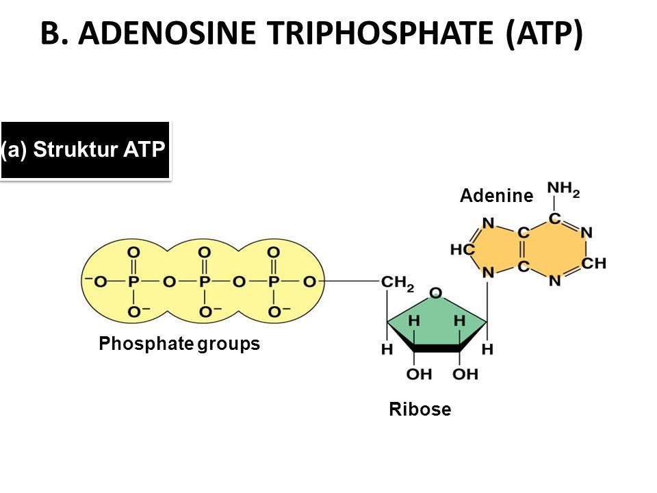 B. ADENOSINE TRIPHOSPHATE (ATP)