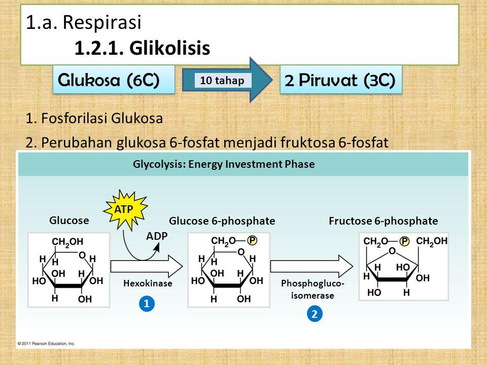 Phosphogluco- isomerase