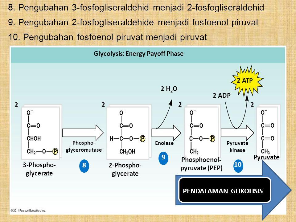 8. Pengubahan 3-fosfogliseraldehid menjadi 2-fosfogliseraldehid