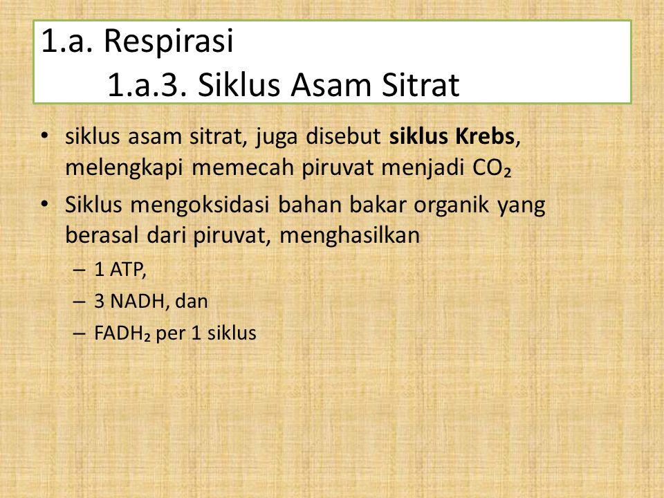 1.a. Respirasi 1.a.3. Siklus Asam Sitrat
