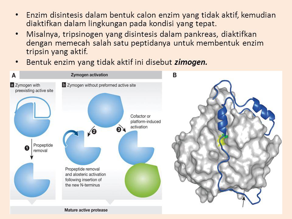 Enzim disintesis dalam bentuk calon enzim yang tidak aktif, kemudian diaktifkan dalam lingkungan pada kondisi yang tepat.