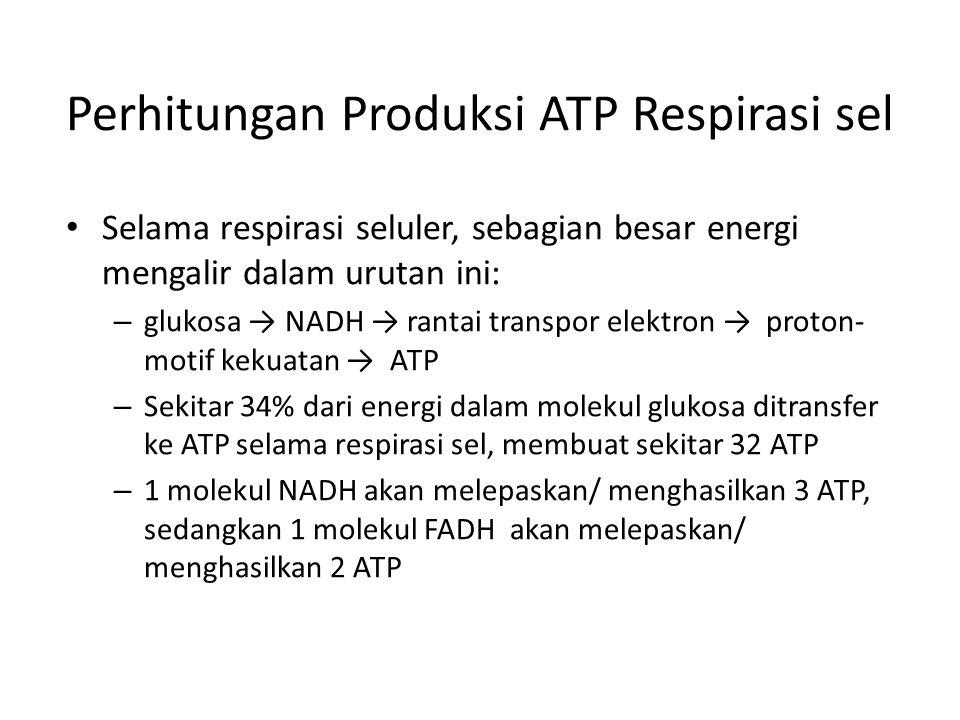 Perhitungan Produksi ATP Respirasi sel