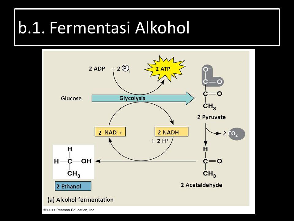 b.1. Fermentasi Alkohol 2 ADP 2 ATP Glucose Glycolysis 2 Pyruvate