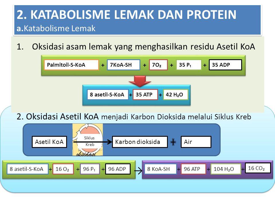 2. KATABOLISME LEMAK DAN PROTEIN a.Katabolisme Lemak