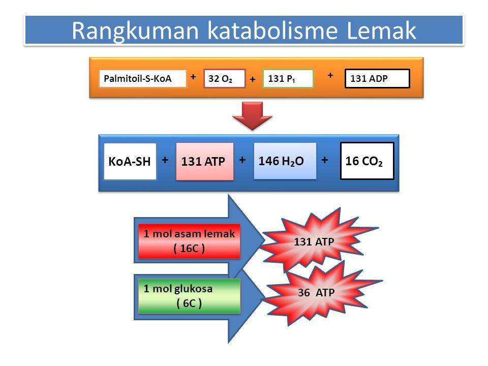 Rangkuman katabolisme Lemak