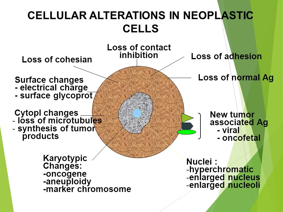 CELLULAR ALTERATIONS IN NEOPLASTIC