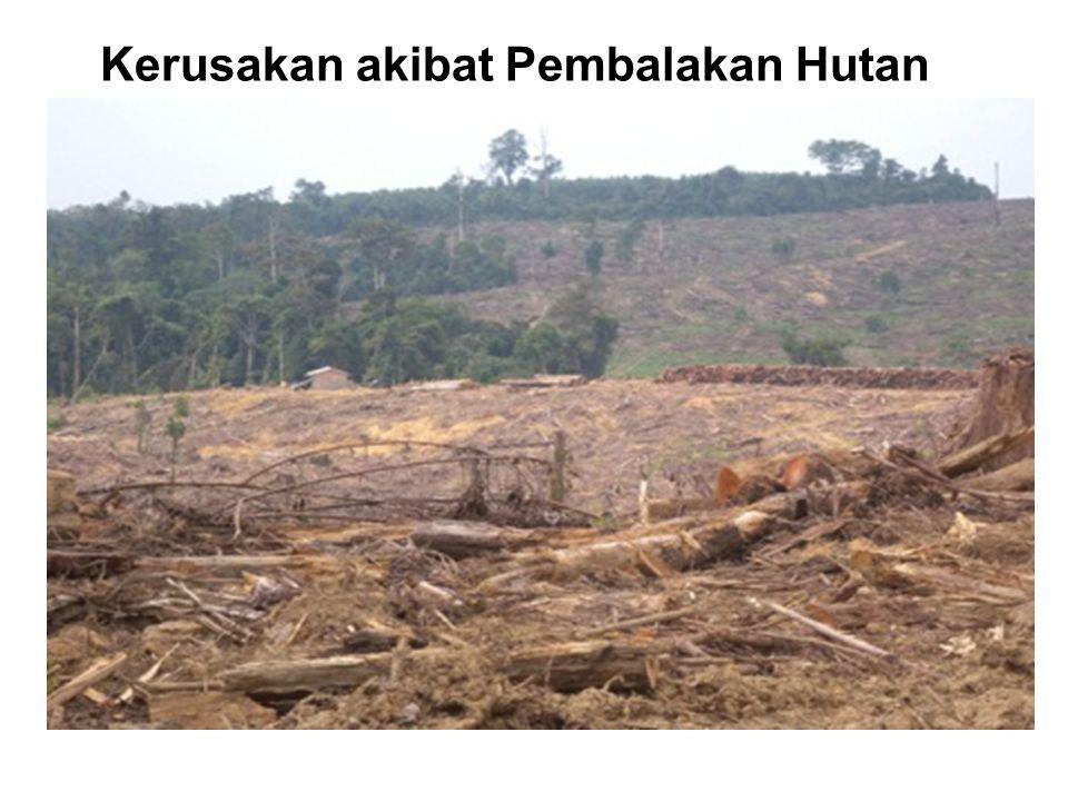 Kerusakan akibat Pembalakan Hutan