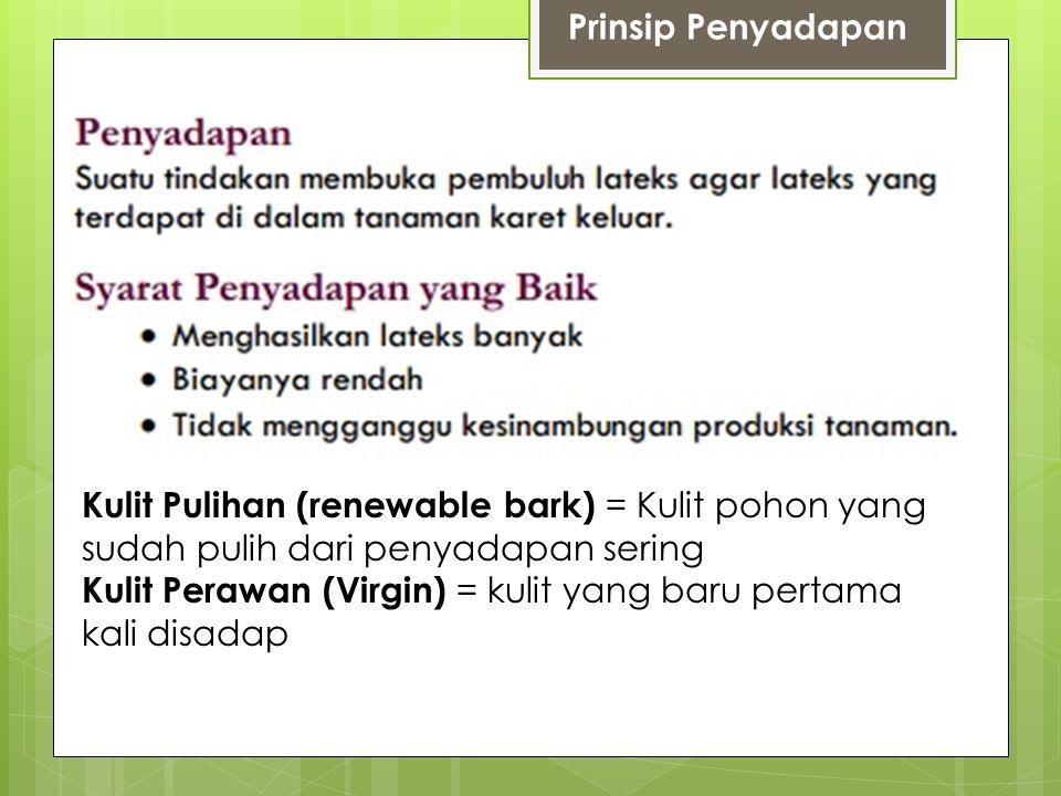 Prinsip Penyadapan Kulit Pulihan (renewable bark) = Kulit pohon yang sudah pulih dari penyadapan sering.