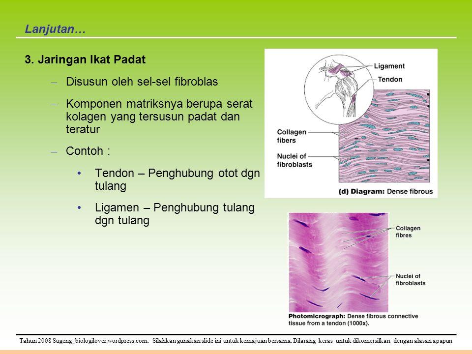 Lanjutan… 3. Jaringan Ikat Padat. Disusun oleh sel-sel fibroblas. Komponen matriksnya berupa serat kolagen yang tersusun padat dan teratur.