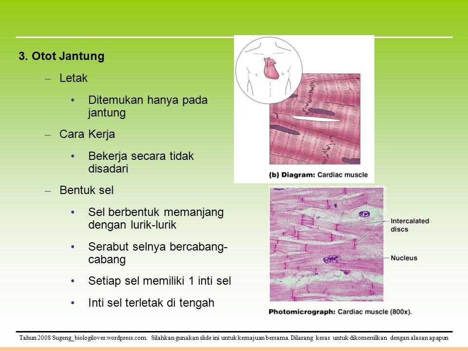 3. Otot Jantung Letak. Ditemukan hanya pada jantung. Cara Kerja. Bekerja secara tidak disadari. Bentuk sel.