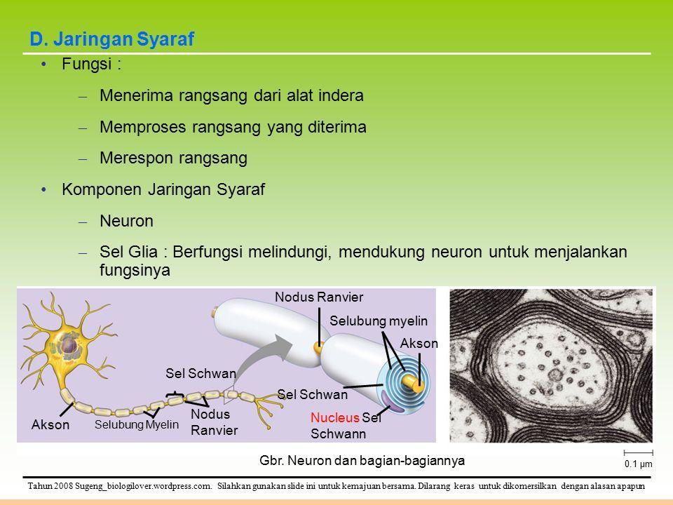 D. Jaringan Syaraf Fungsi : Menerima rangsang dari alat indera