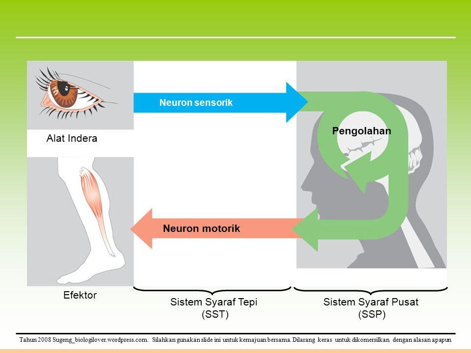 Neuron motorik Pengolahan