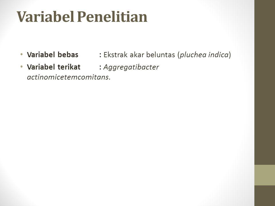 Variabel Penelitian Variabel bebas : Ekstrak akar beluntas (pluchea indica) Variabel terikat : Aggregatibacter actinomicetemcomitans.