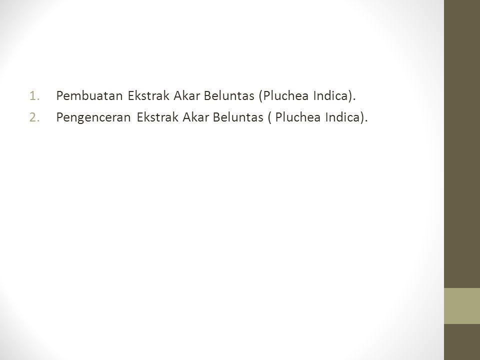 Pembuatan Ekstrak Akar Beluntas (Pluchea Indica).