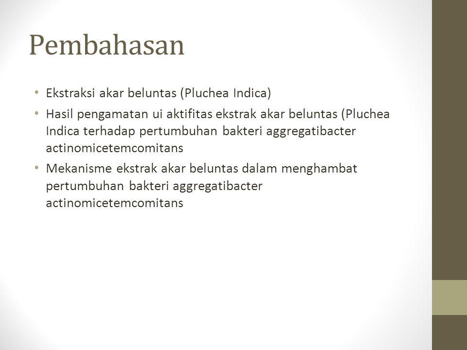 Pembahasan Ekstraksi akar beluntas (Pluchea Indica)