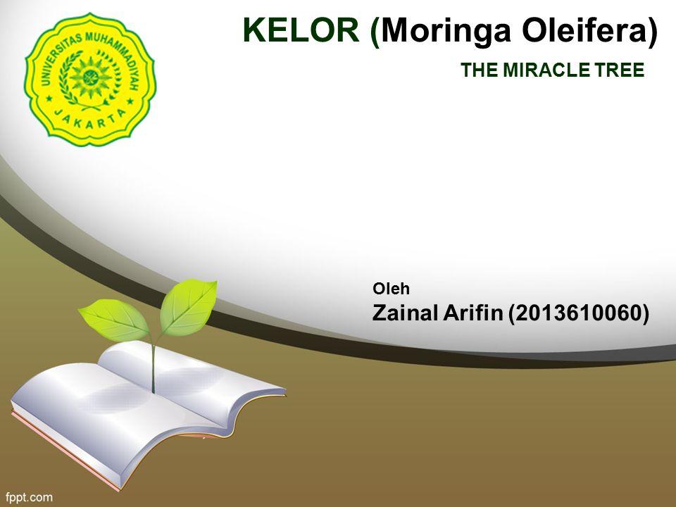 KELOR (Moringa Oleifera)