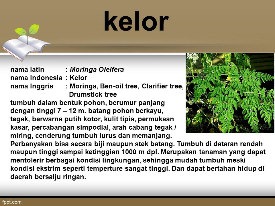 the feasibility of moringa oleifera and Micronutrient composition and acceptability of moringa oleifera leaf acceptability of dried m oleifera leaf-incorporated local dishes and feasibility of.