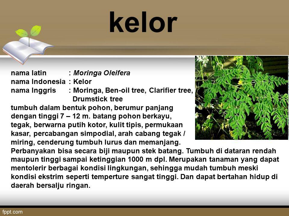 kelor nama latin : Moringa Oleifera nama Indonesia : Kelor