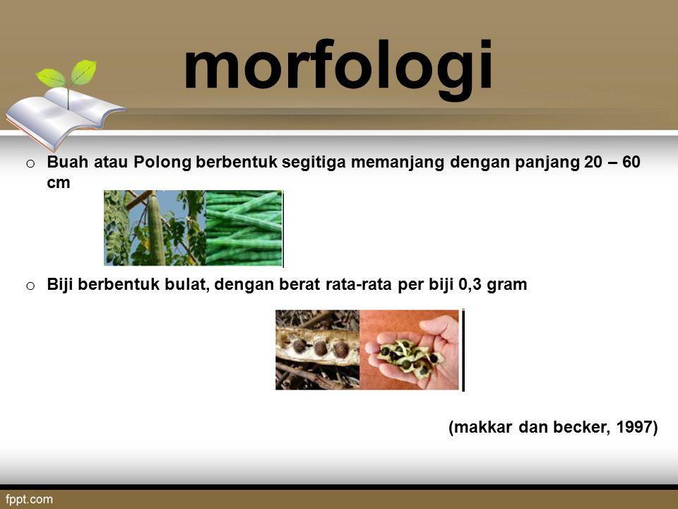 morfologi Buah atau Polong berbentuk segitiga memanjang dengan panjang 20 – 60 cm. Biji berbentuk bulat, dengan berat rata-rata per biji 0,3 gram.