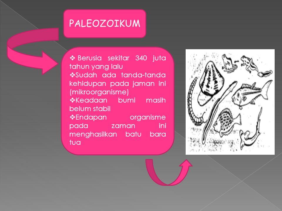 PALEOZOIKUM Berusia sekitar 340 juta tahun yang lalu