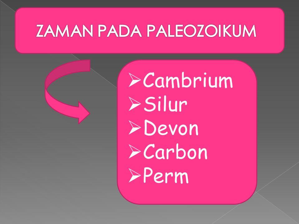 ZAMAN PADA PALEOZOIKUM