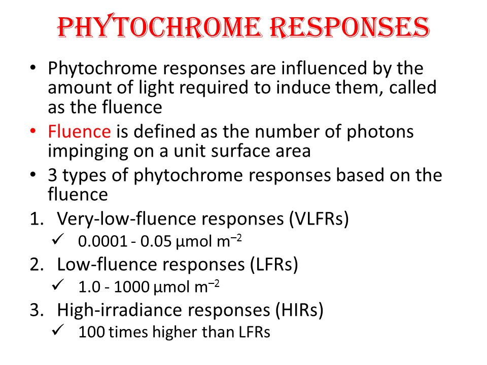 PHYTOCHROME RESPONSES