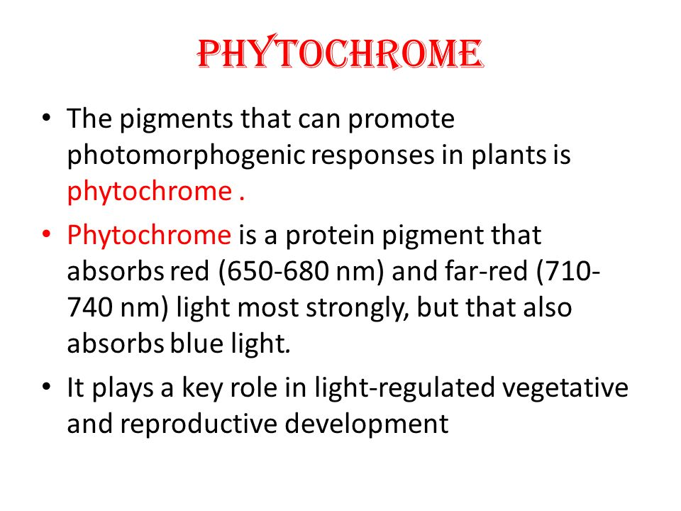 PHYTOCHROME The pigments that can promote photomorphogenic responses in plants is phytochrome .