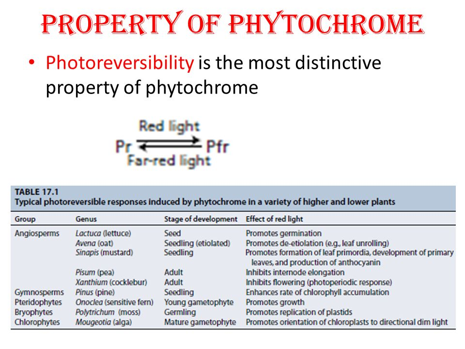 PROPERTY OF PHYTOCHROME