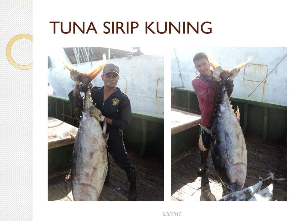 TUNA SIRIP KUNING 4/28/2017