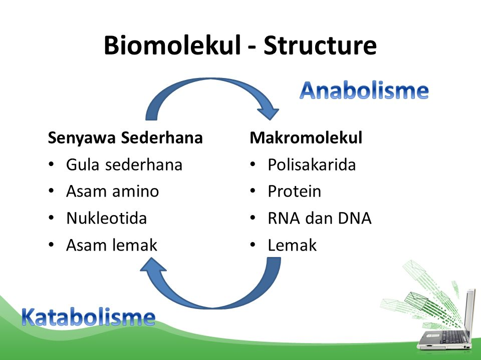 Biomolekul - Structure