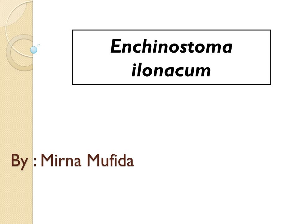 Enchinostoma ilonacum
