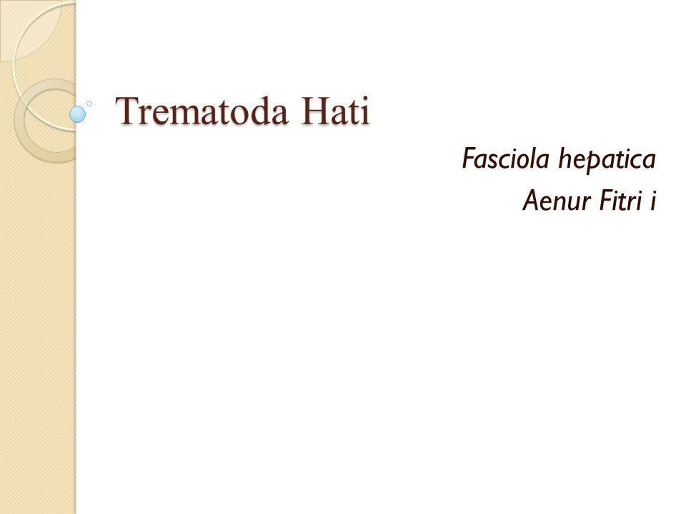 Fasciola hepatica Aenur Fitri i