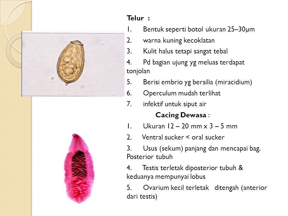 Telur : 1. Bentuk seperti botol ukuran 25–30µm. 2. warna kuning kecoklatan. 3. Kulit halus tetapi sangat tebal.