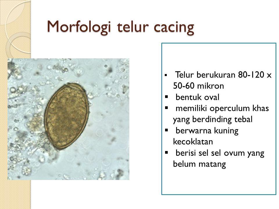 Morfologi telur cacing