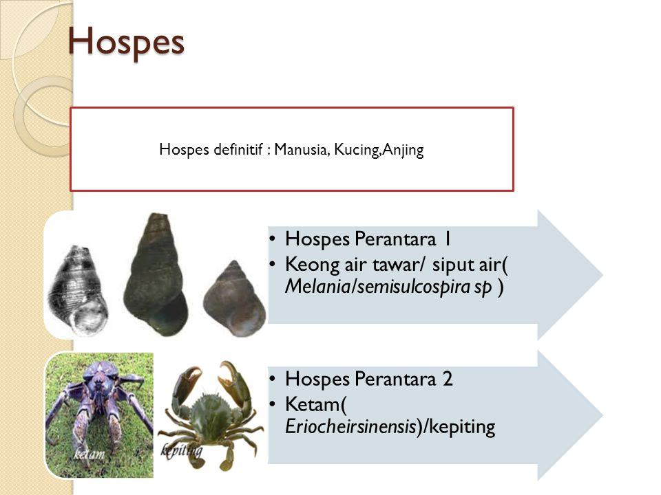 Hospes definitif : Manusia, Kucing,Anjing
