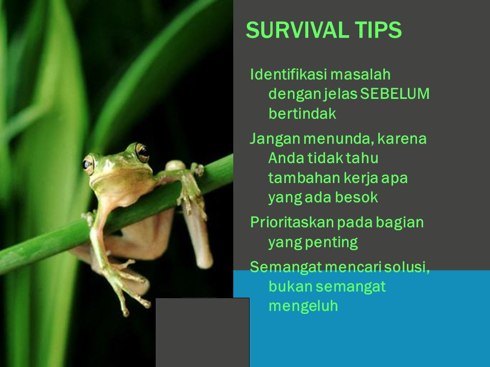 SURVIVAL TIPS Identifikasi masalah dengan jelas SEBELUM bertindak