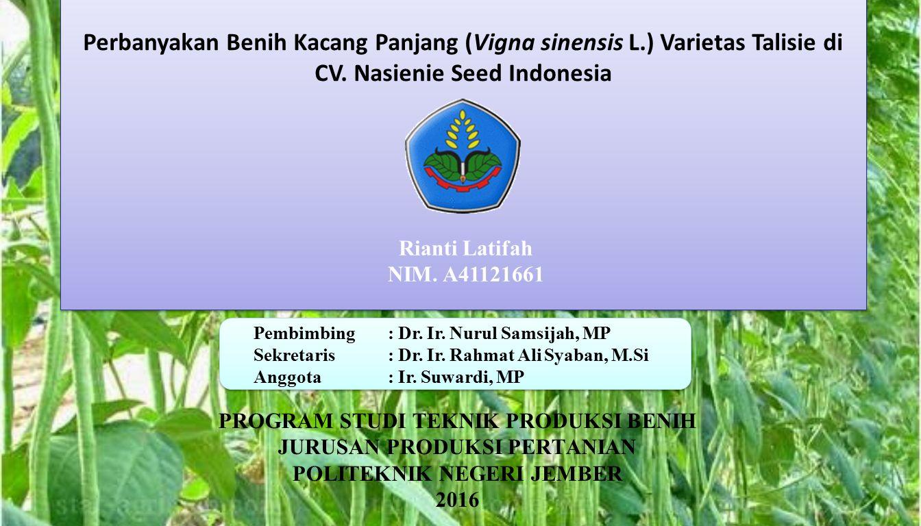 Perbanyakan Benih Kacang Panjang (Vigna sinensis L