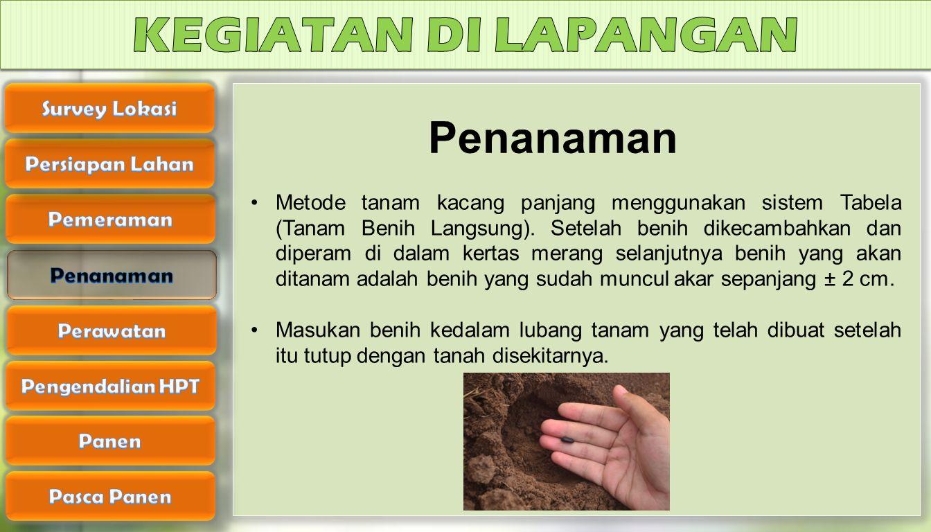 KEGIATAN DI LAPANGAN Penanaman Survey Lokasi Persiapan Lahan Pemeraman
