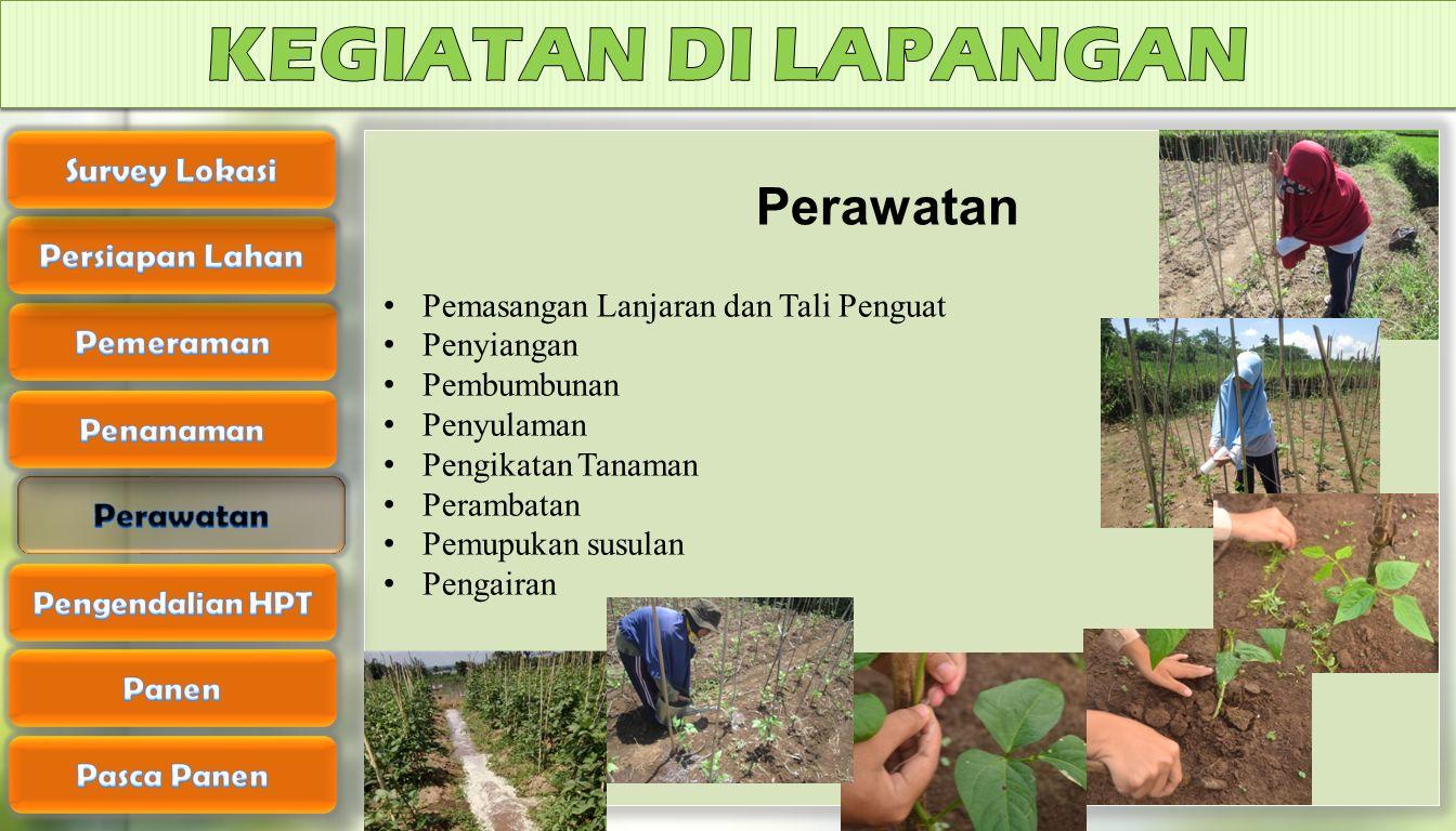KEGIATAN DI LAPANGAN Perawatan Survey Lokasi Persiapan Lahan Pemeraman