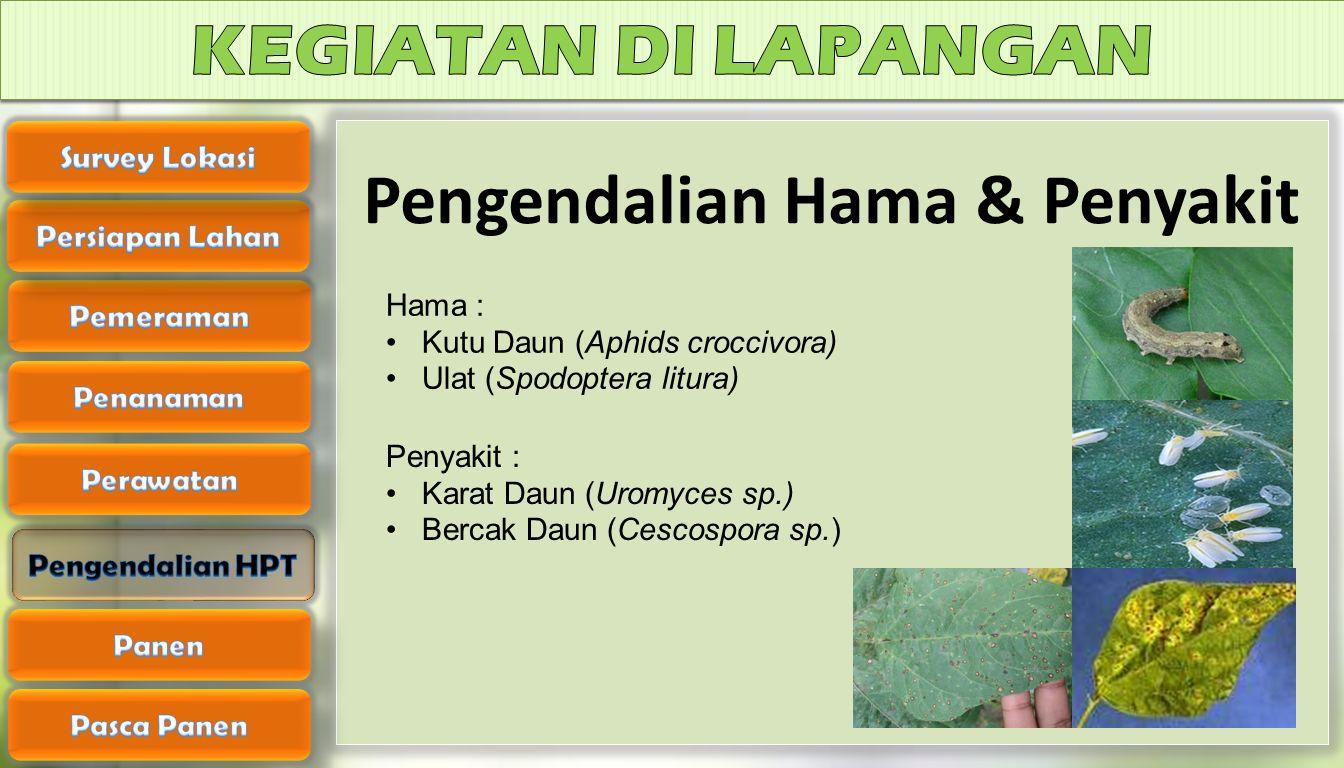 Pengendalian Hama & Penyakit
