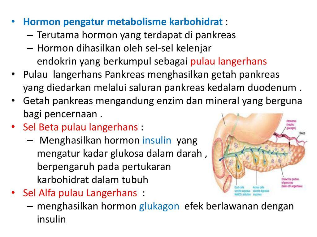 Nett Pankreashormon Fotos - Menschliche Anatomie Bilder ...