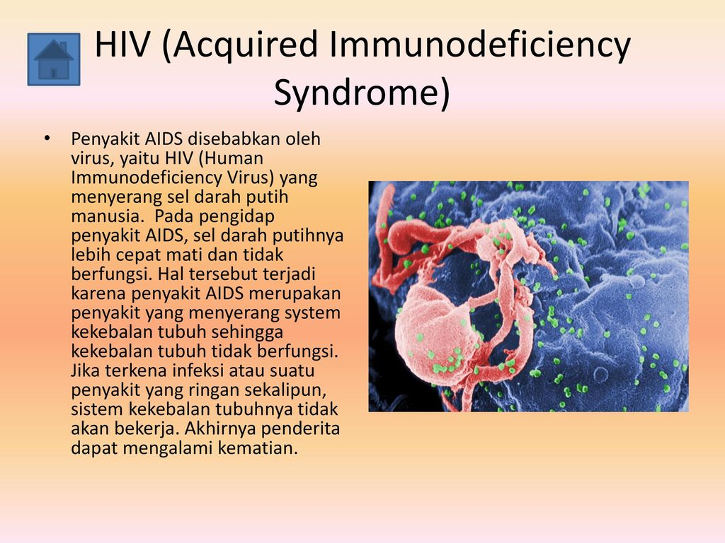 the features of aids and hiv viruses Q: in the future, could the aids virus become airborne a: under almost all circumstances, the answer is no unlike some other viruses, the aids virus (otherwise known as the human immunodeficiency virus -- hiv) is extremely fragile.