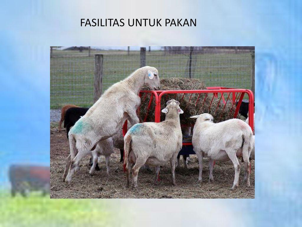 FASILITAS UNTUK PAKAN