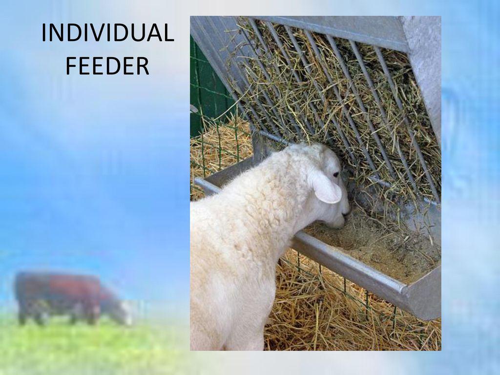 INDIVIDUAL FEEDER