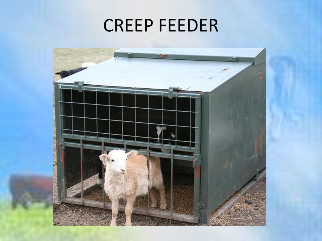 CREEP FEEDER