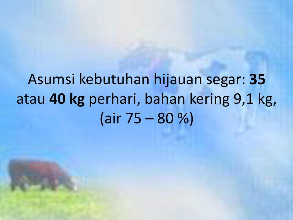 Asumsi kebutuhan hijauan segar: 35 atau 40 kg perhari, bahan kering 9,1 kg, (air 75 – 80 %)