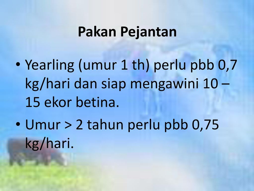Pakan Pejantan Yearling (umur 1 th) perlu pbb 0,7 kg/hari dan siap mengawini 10 – 15 ekor betina.