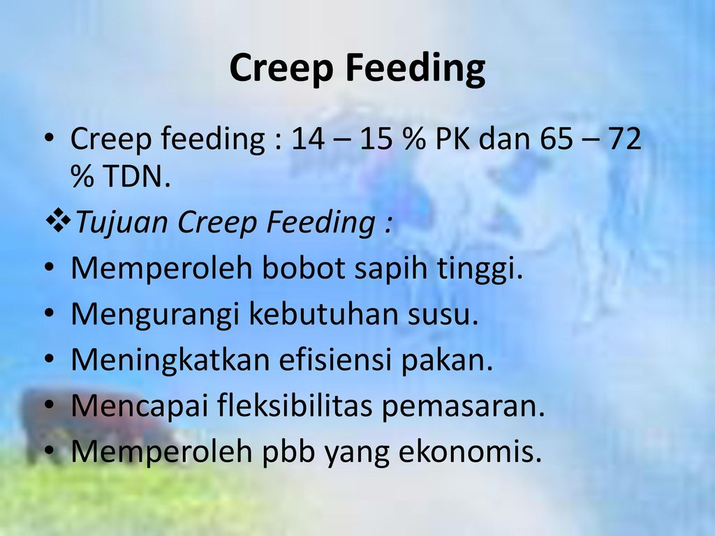 Creep Feeding Creep feeding : 14 – 15 % PK dan 65 – 72 % TDN.