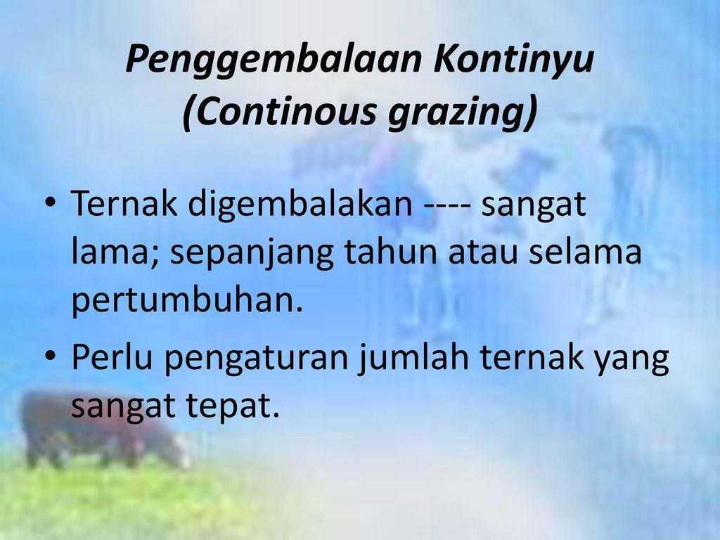 Penggembalaan Kontinyu (Continous grazing)