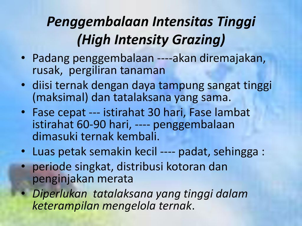 Penggembalaan Intensitas Tinggi (High Intensity Grazing)